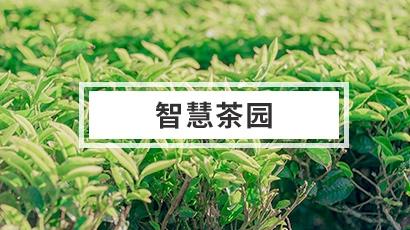 茶园水肥一体化